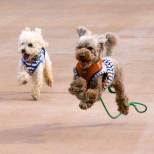Dog Collar & Harness